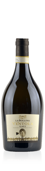 vin La Bollina Ventola Gavi 2016 Cortese