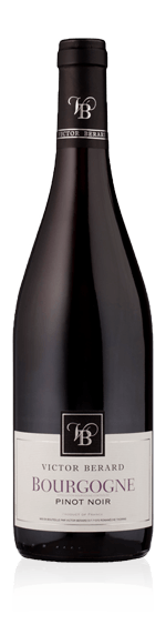 vin Victor Berard Pinot Noir 2016 Pinot Noir