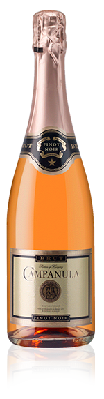 Campanula Pinot Noir Spark Rose Nv